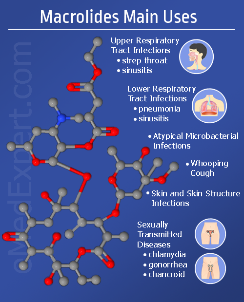 macrolides common uses infographic