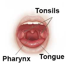 throat and tonsils